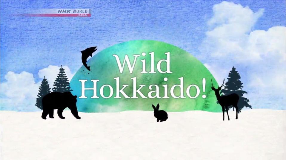 「Wild Hokkaido!」的函館山無盡魅力動畫