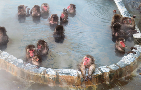 Check Out the Hot-Tubbing Monkeys!